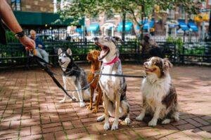 Dog Friendly Law Firm Sacramento